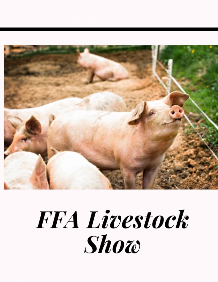 FFA Livestock show